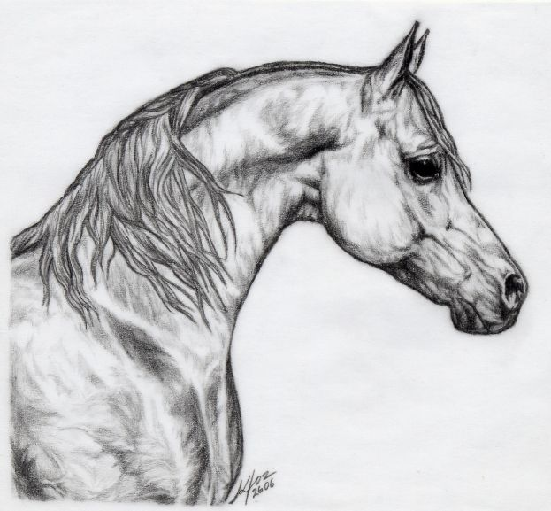 Drawing of an Arabian Horse -- very lovely!