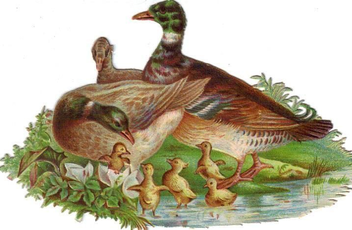 Victorian Die Cut Scrap Duck Family c1880