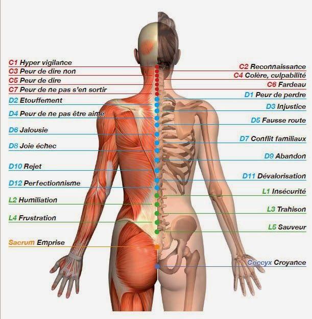 Connaissez-vous les correspondances émotionnelles avec vos VERTEBRES ?     Suivant où survient un mal de dos, ou une douleur inexpliqué...