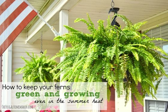 246 best images about outdoors potted plants flowers on pinterest gardens window boxes and - Gardening in summer heat a small survival guide ...
