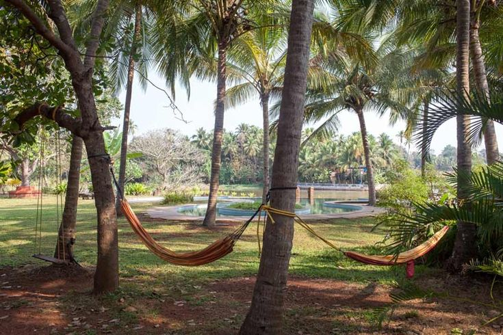 View of hammocks looking out across to the river at Olaulim, north Goa. More info: https://www.tripzuki.com/hotels/olaulim-backyards-goa/