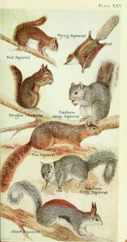 Field book of North American mammals; - Biodiversity Heritage Library
