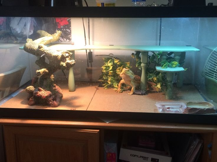 Image result for 55 gallon tank
