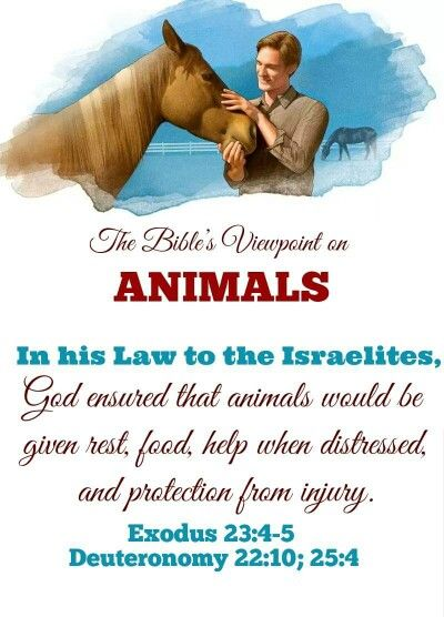 Proverbs 12:10 The righteous one takes care of his domestic animals, But even the mercy of the wicked is cruel