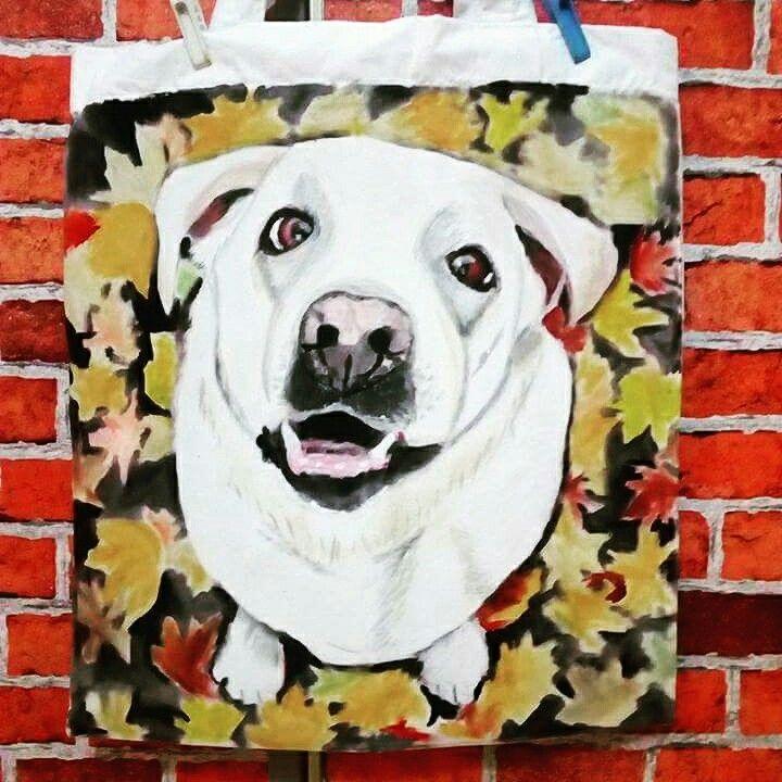 Labrador Marty už dělá radost své paničce
