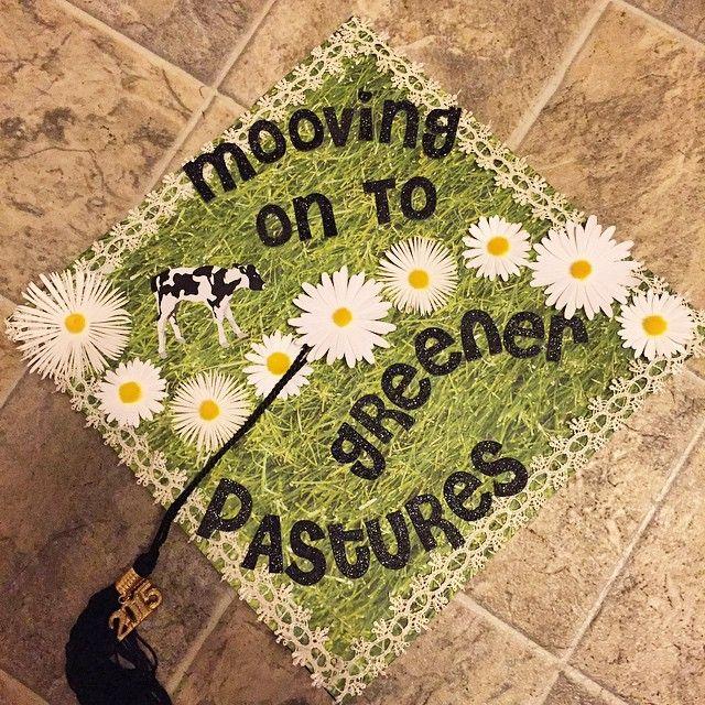 Image result for cow graduation cap