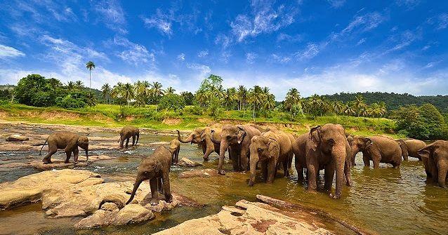 Taman-Nasional-Way-Kambas forests taken at East Lampung,Lampung