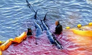 Stop Dolphin Slaughter In Taiji