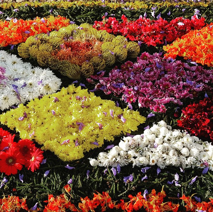 A Festa da Flor da Madeira é um dos maiores cartazes turísticos da Madeira. #madeira #visitmadeira #funchal #visitfunchal #acontecemadeira #asfotosdanadia #wonderfuldreams #sonhosvividos #2017 #cores #flower #flowerfestival #festadaflor #festaflor2017