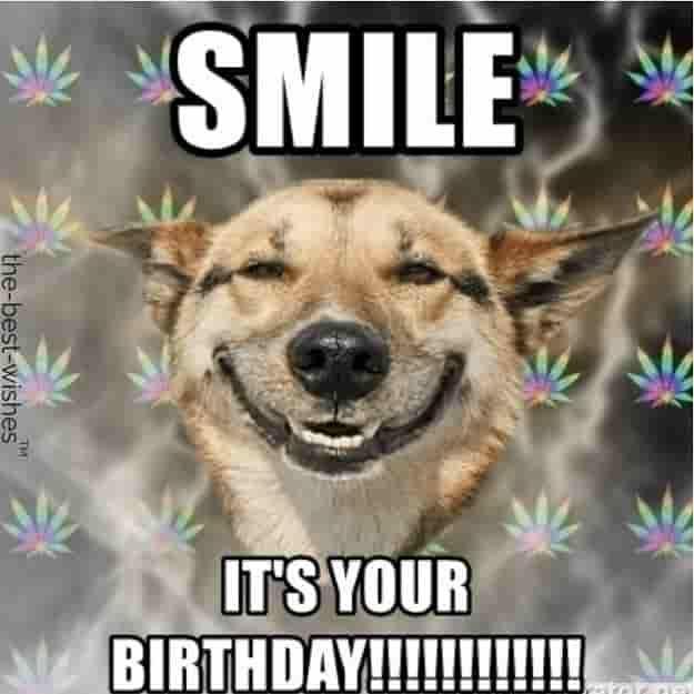 Top 100 Funniest Happy Birthday Memes Most Popular Happy Birthday Dog Birthday Humor Happy Birthday Funny