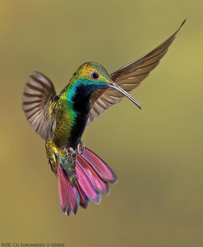 Die Besten 17 Ideen Zu Kolibri Tattoo Auf