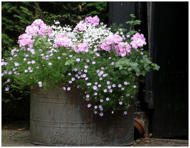 love the delicate flowers and color with the old galvanized container...