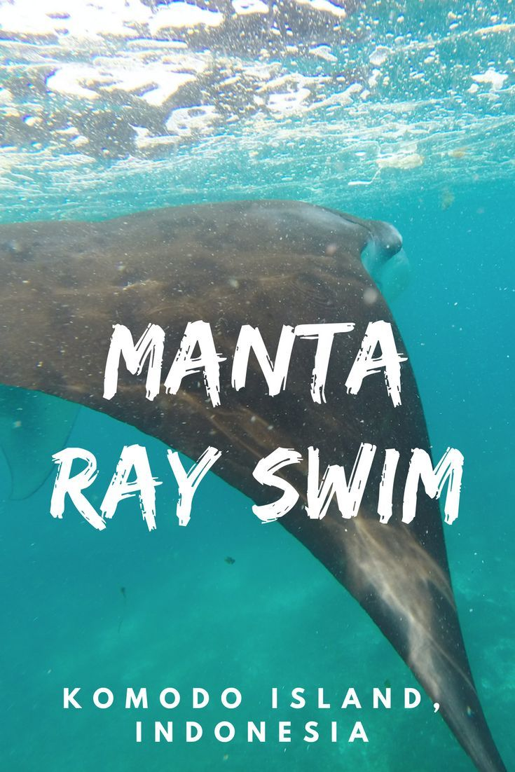 A flashback to the time I swum with 30+ manta ray. komodo island indonesia  divig - Indonesia Travel. Snorkelling, amazing wildlife ☆☆ Travel Guide / Bucket List Ideas Before I Die By #Inspiredbymaps ☆☆: