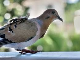 #BirdProblems on my Balcony, what do I do? http://bit.ly/1LUxOnC
