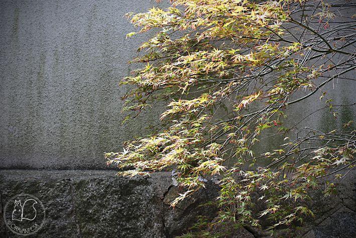 Oravanpesä: JAPANI 2016 osa 8: Naoshima