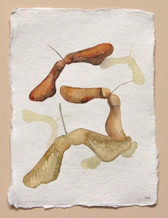Alex Christmas    sycamore maple seeds original watercolour by SeasideStudiosUK, £30.00