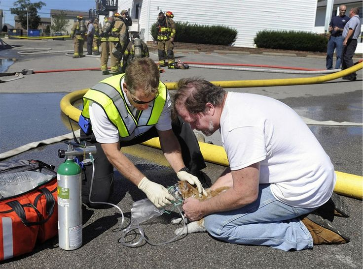 Firefighter rescues cat from apartment fire - PhotoBlog