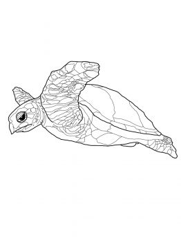 Hawksbill Turtle Coloring Pages