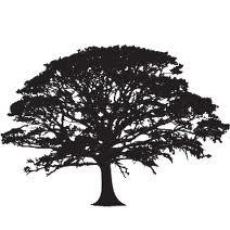 Oak Tree outline