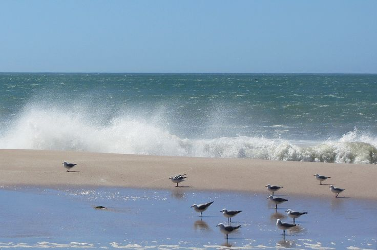 GULL IN AFRICA - Just chillin' here with some of my favorite feathered friends, another day, another mussel ;)  http://www.absolutebeach.co.za/  #beachlife #seagulls #southafrica #westcoast