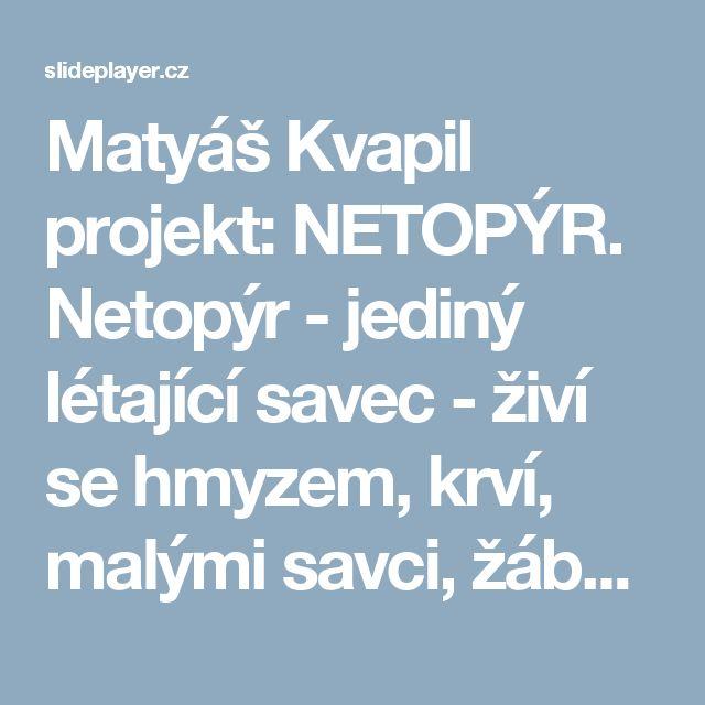 Matyáš Kvapil projekt: NETOPÝR. Netopýr - jediný létající savec - živí se hmyzem, krví, malými savci, žábami a rybami - aktivní je v noci nebo za soumraku. - ppt stáhnout