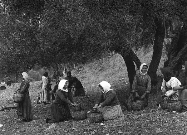 The picking of the olives Preveli, Crete, 1911. Frédéric Boissonnas.