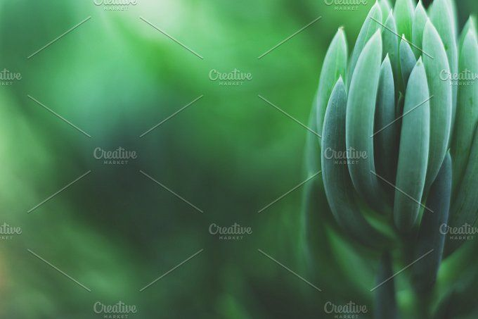 Dreamy Succulent Closeup by René Jordaan Photography on @creativemarket