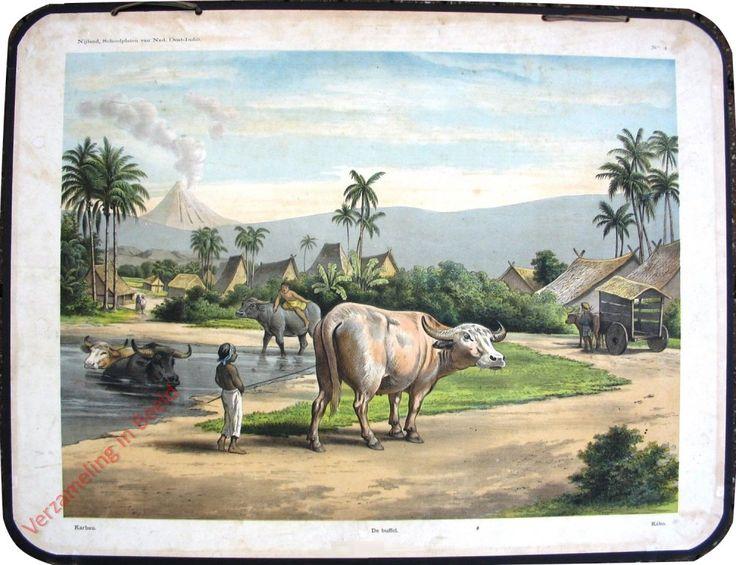 Schoolplaten: Indië - Karbau - De buffel - Kebo