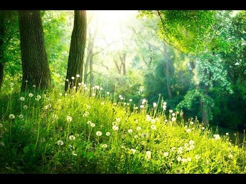 1 Hour Sleep Music: Fall Asleep Relaxing Music, Lullaby Baby Songs Sleep...