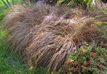 81 best images about landscapes ornamental grasses for for Ornamental grasses that stay green all year