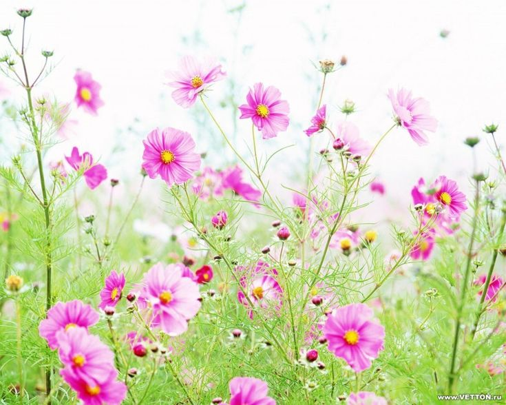 flores silvestres - Google Search