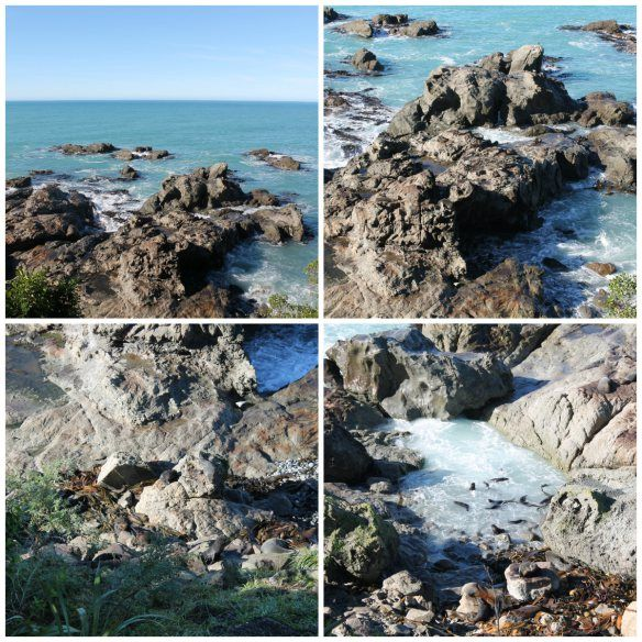 Seal Colony with #StrayBus in New Zealand