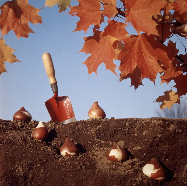 When to plant which bulbs.