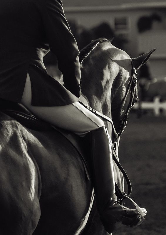 Dressage - M. Quillin riding 'Fames Promise' @ the Erie County Fair - by Boocowski