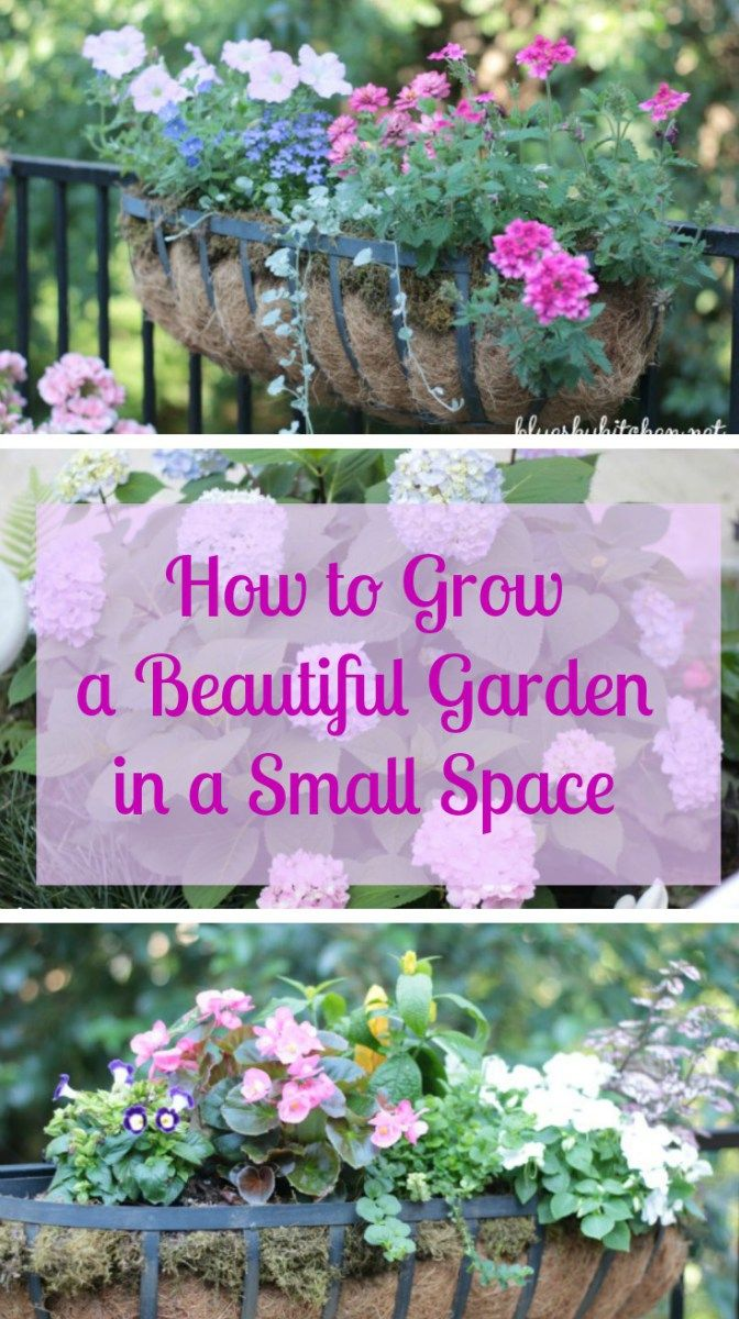 How to Grow a Beautiful Garden in a Small Space