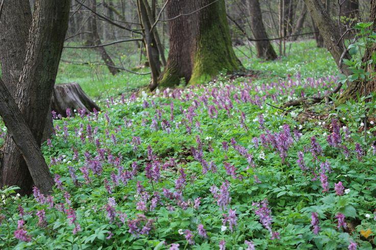 Jaro v hanáckém luhu – U zajíca