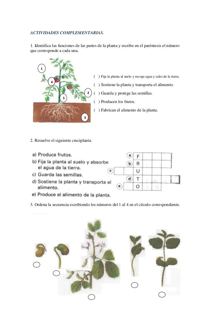 ACTIVIDADES COMPLEMENTARIAS.1. Identifica las funciones de las partes de la planta y escribe en el paréntesis el númeroque...