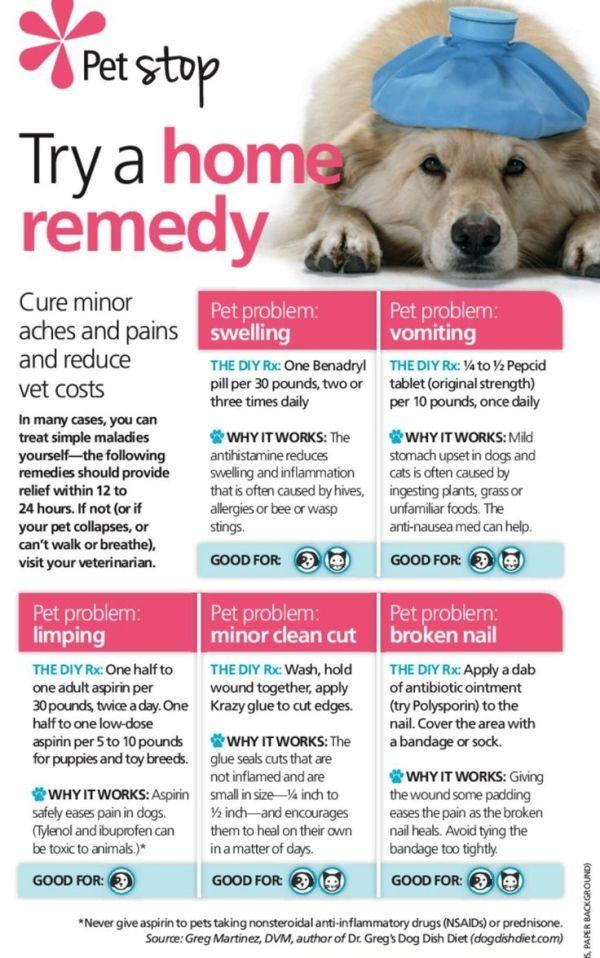 Best Stuff For Dog Nausea