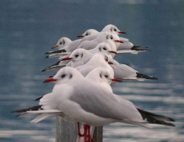 ~Seagulls~