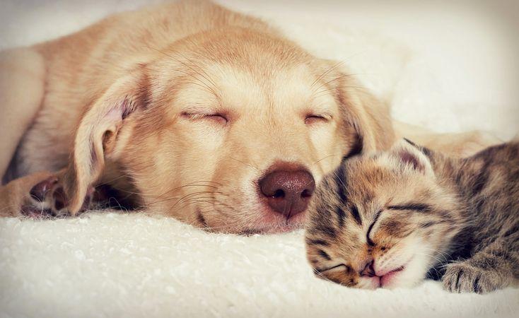 Testaa,+mikä+lemmikkieläin+olet!