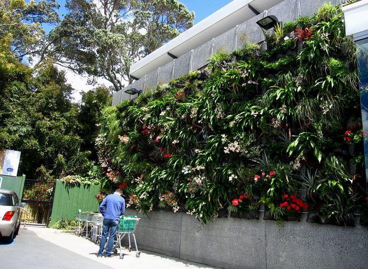 Hanging Garden In Remuera Nz 39 S Largest Outdoor Vertical
