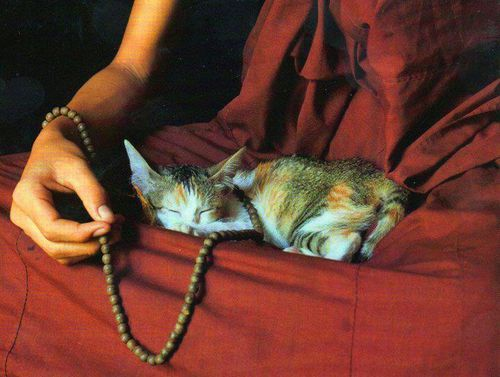 The monk and the cat. #buddhist #tibet #mindfulness