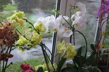 Odkvitla vám vaše orchidea? Tu je najjednoduchší spôsob ako ju znova rozkvitnúť!