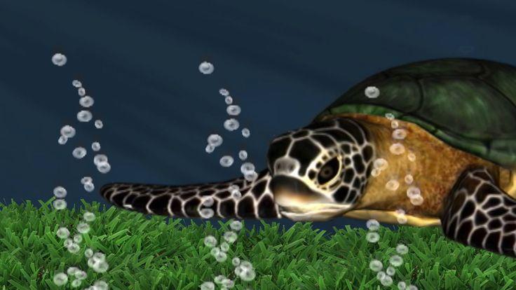 Meet Sandy the Turtle