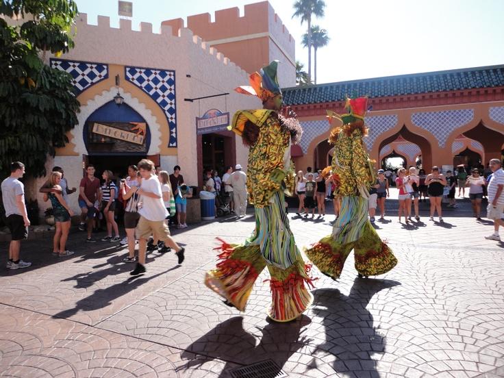 Busch Gardens Tampa Bay Fl Travel Pinterest