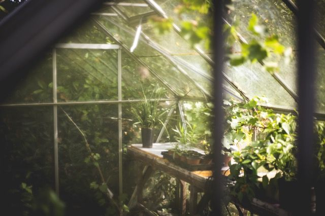 Create your own greenhouse  How oftendo you buyfresh herbs only to have them go bad before you use them up? My guess is ALOT! Or, maybe you ju... Check more at http://anaturalshift.com/create-your-own-greenhouse/
