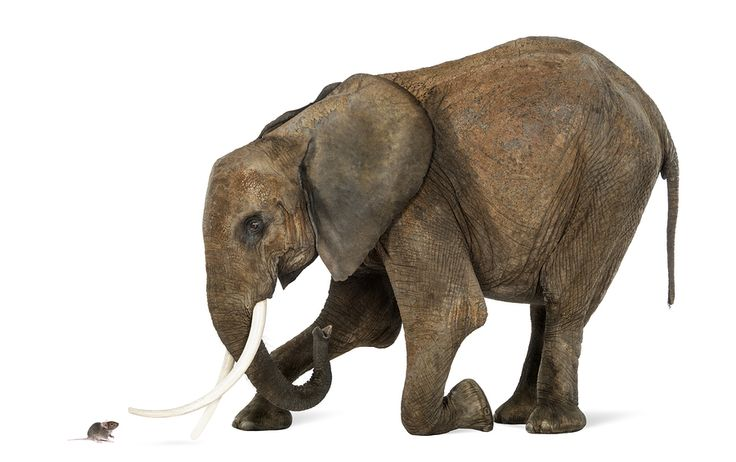 Go fast, really fast. An elephant can't catch a running mouse but he can crush him when he's standing still. Think about your competition, outsmart them.