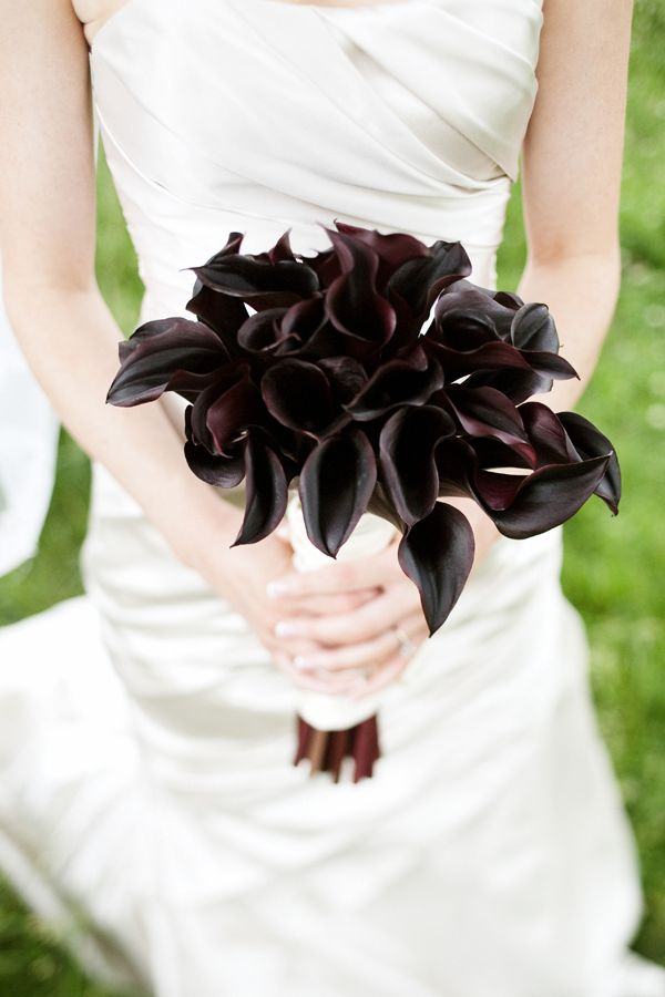 This bouquet of deep purple mini calla lilies contrasts beautifully against the backdrop of the white dress. Shop mini calla lilies in a variety of stunning colors year-round at GrowersBox.com!: Fall Flowers, Black Bouquets, Black Flowers, Calla Lilly, Colors Black, Black Calla Lilies Bouquets, Purple Calla Lilies, Dark Colors, Alternative Wedding Bouquets