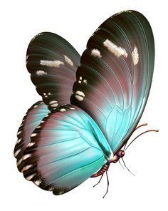 Butterfly 7.png in 2018 | Butterfly | Pinterest | Butterfly, Butterfly art and Butterfly painting