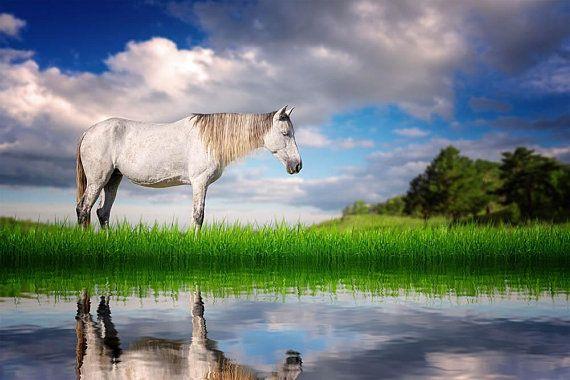 Digital Backdrop Vintage Horse Digital Background Digital Download Photoshop Background Add Your Own Subject